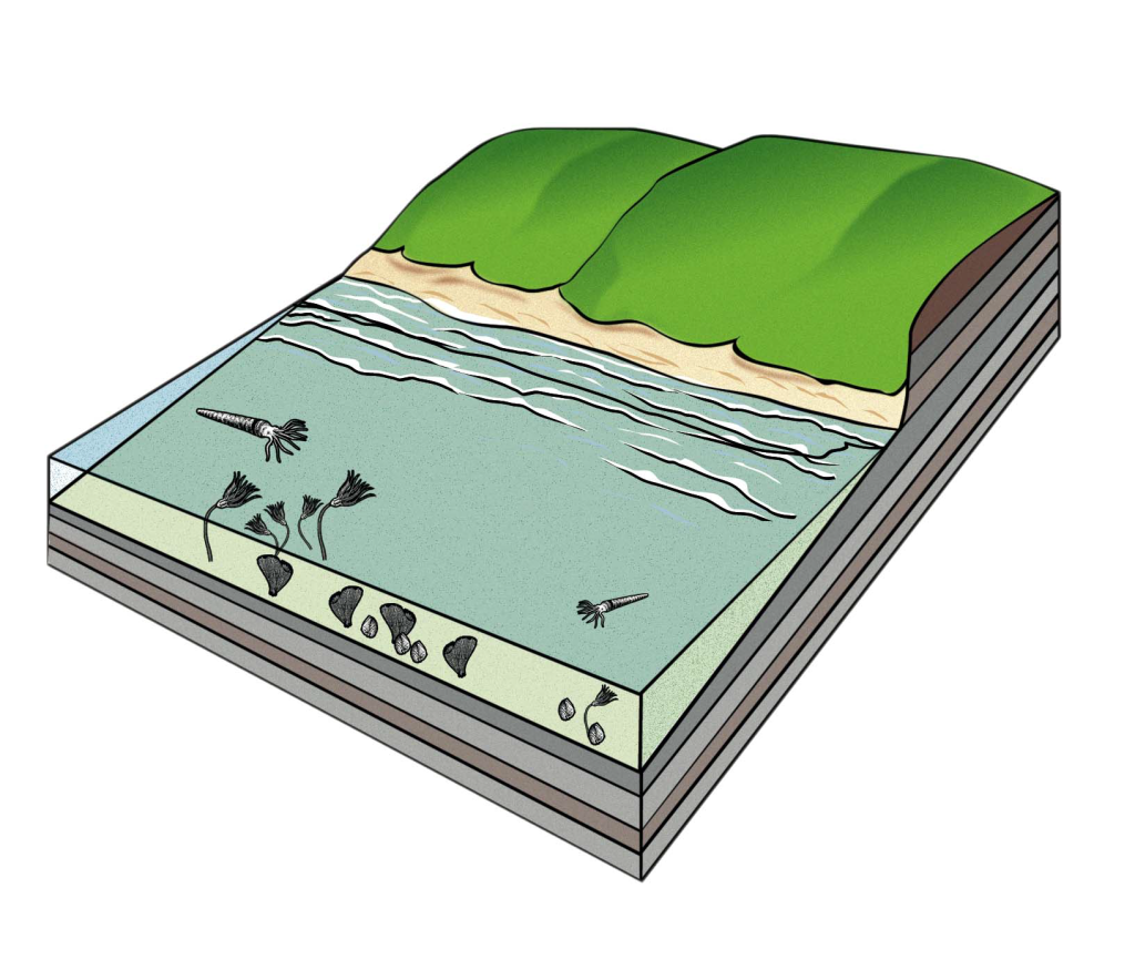 Tropical Lake Geology Cross Section