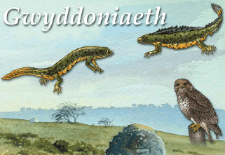 Gwyddoniaeth - Y Parth Dysgu